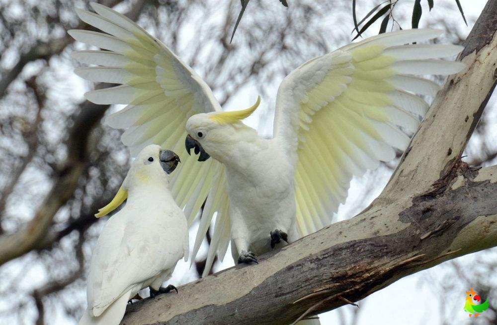 Расправил крылья