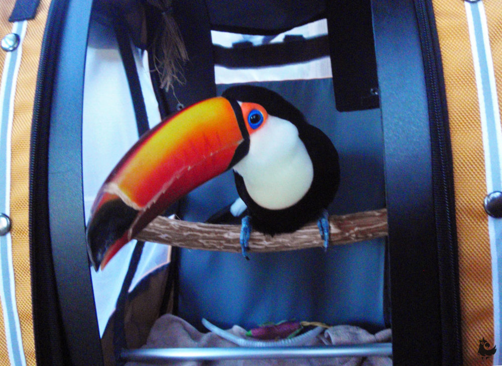Тукан в сумке