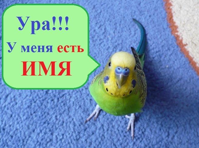 Как назвать попугая